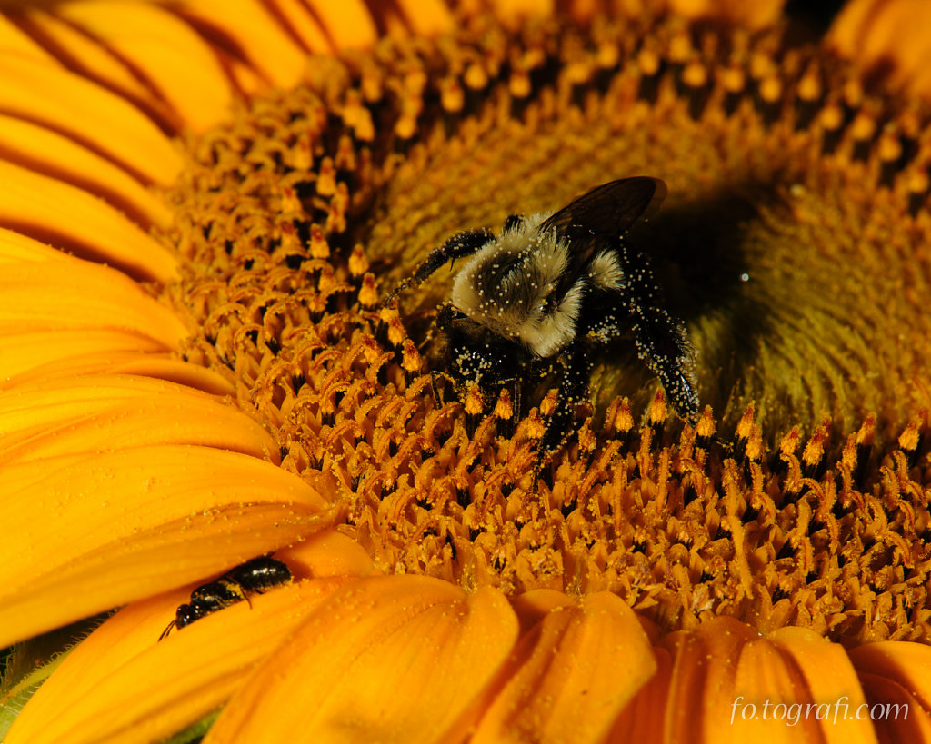 Bumble Bee and Friend