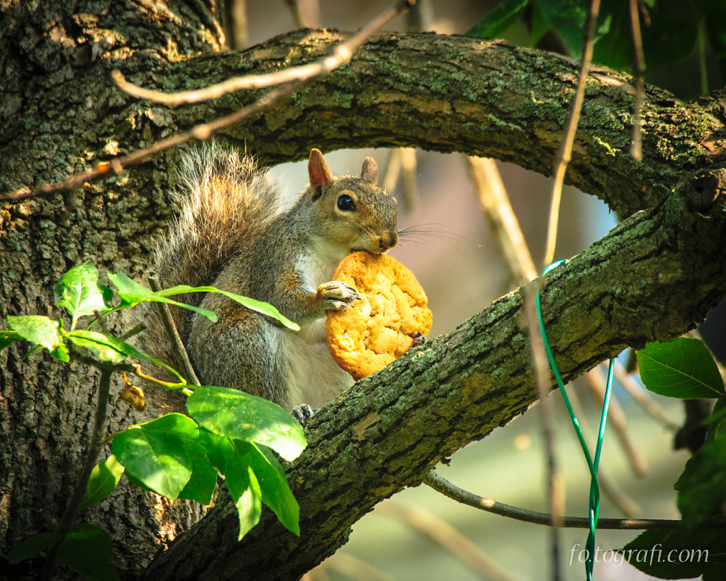 Squirrel and Peanut Butter Cookie